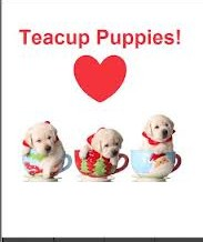 Cuddling Teacups Puppies