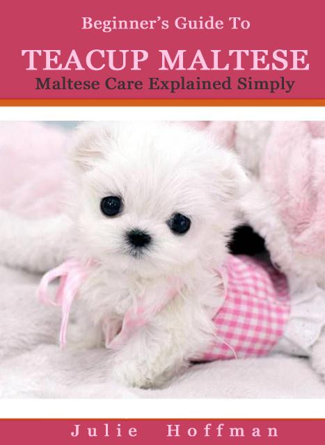 Teacup Maltese Dogs For Sale